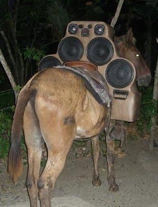 burro tuning.jpg