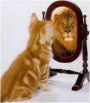 gatito en el espejo.jpg