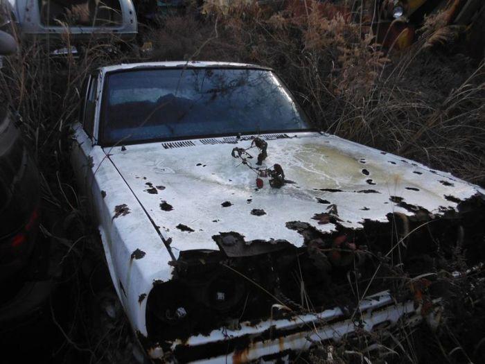 abandoned_cars_36.jpg