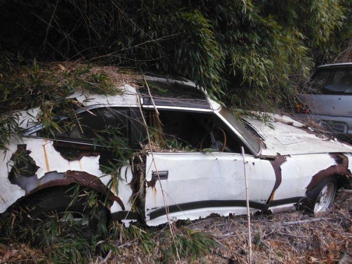 abandoned_cars_39.jpg